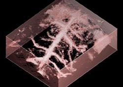 3D-Bloodimage
